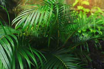 Fotomurales - exotic Tropical bright green palm Leaves with sunlight wallpaper in endless summer country