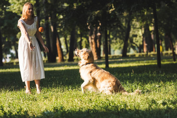 Wall Mural - full length view of beautiful girl in white dress playing with golden retriever on meadow