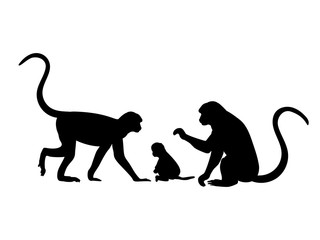 Monkey family. Silhouettes of animals