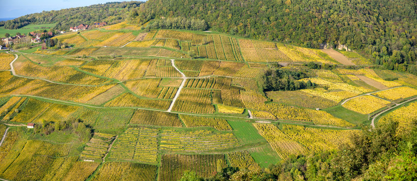 Panoramic view of the vineyards near Chateau Chalon, Departement Jura, Franche-Comte, France