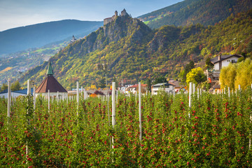 Foto auf Acrylglas Blau Jeans Farm of apple trees under the beautiful Saben Abbey in South Tyrol, Italy