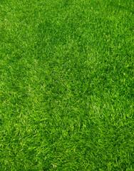 Tuinposter Gras background of green grass
