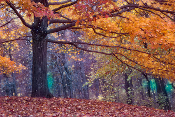 Autumn photo edited in a painterly way