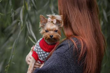 Yorkshire terrier with red haired girl