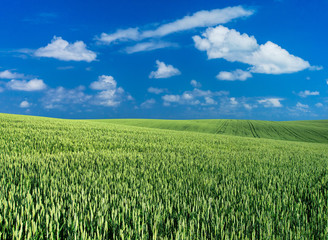 Wall Mural - green field and blue sky