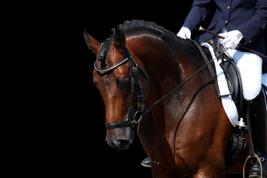 Bay horse portrait during dressage show isolated on black