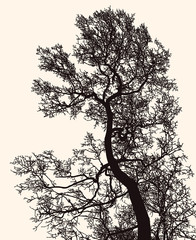 Vector image of deciduous tree silhouette in winter