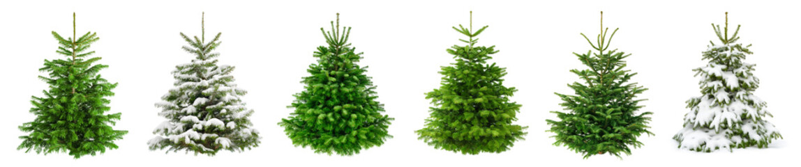 Set of 6 studio shots of fresh gorgeous fir trees in lush green for Christmas, without ornaments, isolated on pure white  Fotobehang