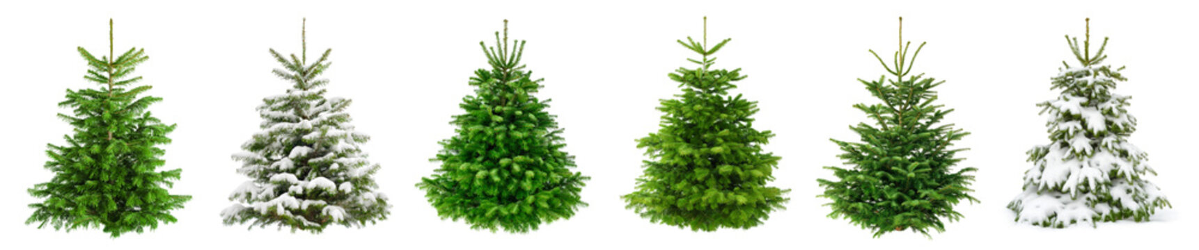 Set of 6 studio shots of fresh gorgeous fir trees in lush green for Christmas, without ornaments, isolated on pure white