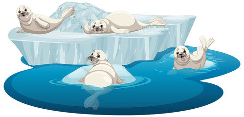 Isolated picture of white seals