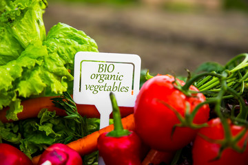 Bio organic vegetables with label