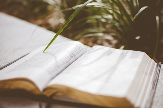 Closeup shot of an open bible near a plant with a blurred background