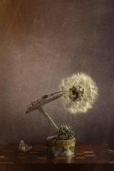 steampunk macchina del fiore   ingranaggi antico