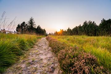 Fototapete - Wanderung im Schwarzwald