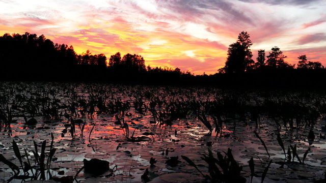 view from a tour boat of okeefenokee swamp at sunset