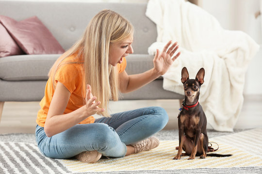 Angry young woman scolding her toy terrier dog at home