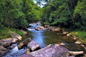 Papiers peints Rivière de la forêt river in the forest