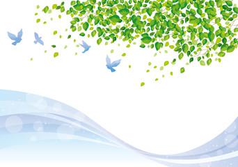 木:木 幹 枝 自然 緑 葉 新緑 新芽 初夏 夏 春 エコ グリーン