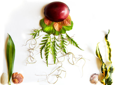 Charming image of jellyfish and seaweeds created with tropical botanical materials