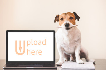 User-generated content (UGC) concept with dog doing creative work on notebook