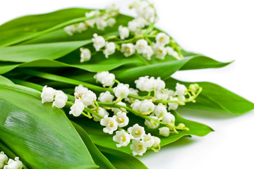 Wall Murals Lily of the valley Lily of the valley or may bells flower on white background.