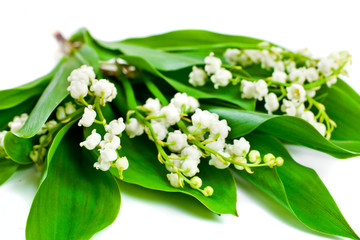 Poster de jardin Muguet de mai Lily of the valley or may bells flower on a white background.
