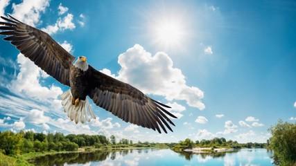 bird, eagle, flying, sky, fly, flight, wildlife, nature, animal, wings, vulture, raptor, osprey, blue, hawk, bird of prey, wing, birds, bald eagle, soaring, predator, beak, prey, feathers, feather