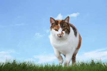Katze streift durch den Rasen