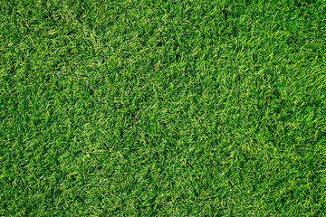 Papiers peints Herbe Green grass texture can be use as background