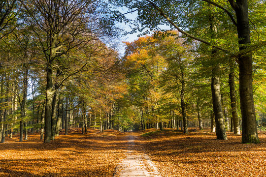 Autumn colors in Nature reserve Planken Wambuis at the Veluwe in Gelderland in the Netherlands