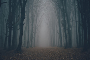 Forest in fog with mist. Fairy spooky looking woods in a misty day. Cold foggy morning in horror forest with trees Fotobehang