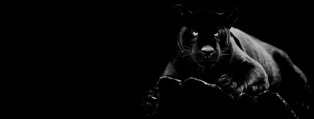 Wall Murals Panther Black jaguar with a black background