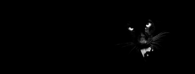 Foto auf AluDibond Panther Black panther with a black background