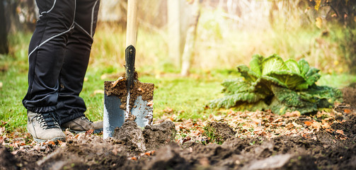 Worker digs soil with shovel in colorfull garden wide panorama or banner. Loosen black dirt at farm, agriculture concept autumn detail. Man boot or shoe on spade prepare for digging.