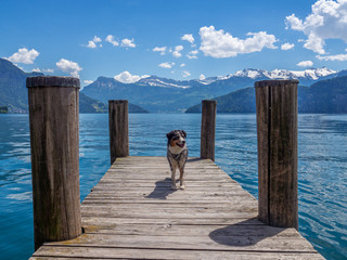 Hund steht auf einem Steg mit Alpenpanorama im Hintergrund