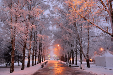 Beautiful urban alley with snowy trees and a path with benches under the light of lanterns