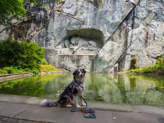 Hund vor Löwendenkmal in Luzern