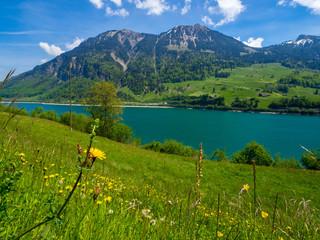 Berge und See hinter einer Blumenwiese (Lungenersee Schweiz)