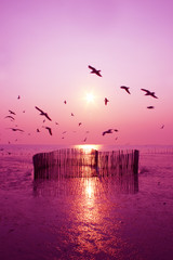 Deurstickers Crimson Beautiful nature landscape sunset and seagull birds on the beach.