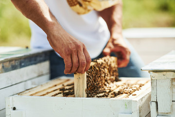 Close up view. Beekeeper works with honeycomb full of bees outdoors at sunny day