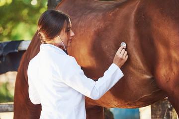 Using stethoscope. Female vet examining horse outdoors at the farm at daytime