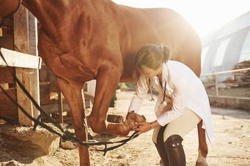 Fototapeta Using bandage to heal the leg. Female vet examining horse outdoors at the farm at daytime