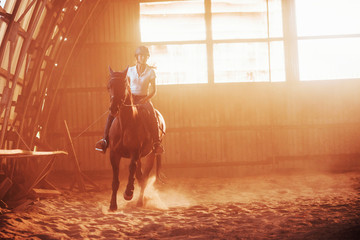 Majestic image of horse silhouette with rider on sunset background. The girl jockey on the back of a stallion rides in a hangar on a farm