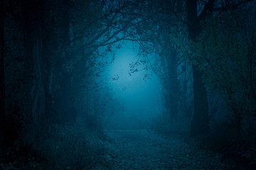 Mysterious, blue-toned forest pathway. Footpath in the dark, foggy, autumnal, cold forest among high trees. Fototapete