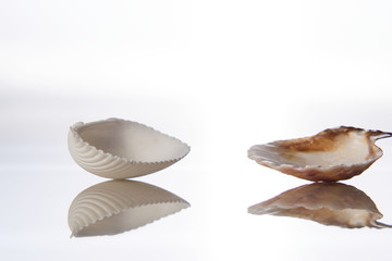 Seashell and reflection in glass on a white background