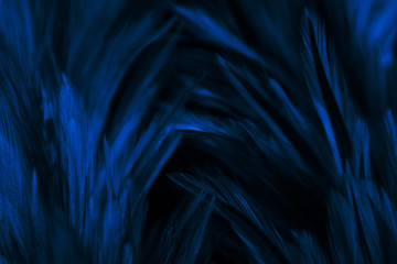 Beautiful abstract colorful pink and white feathers on dark background and soft white blue feather texture on white pattern