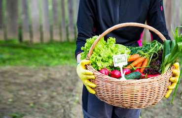 Farmer hands with fresh organic vegetables basket, local farmers market concept, healthy local produced food