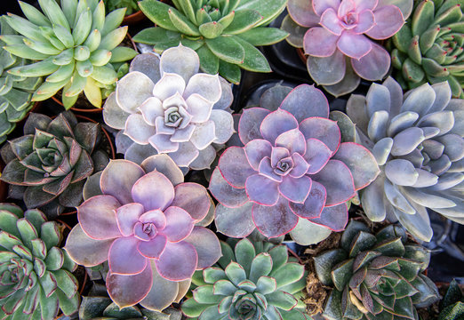 Collection of small decorative succulents in pots, top view.