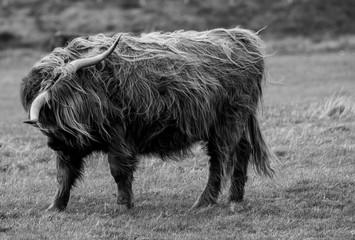 Scottish Wildlife Photography