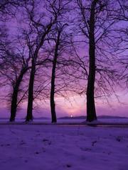 Papiers peints Violet Paysage d'hiver au coucher de soleil